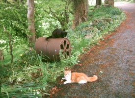 Cats & garden roller